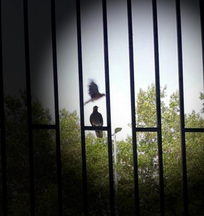 2birdsfree-a