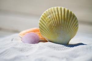 shells-792912_1920