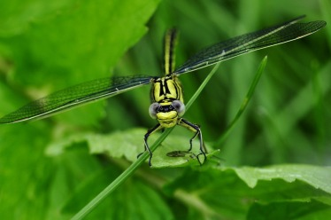 dragonfly-122794_960_720