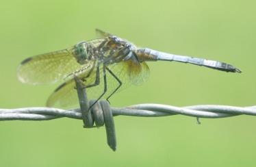dragonfly-220802_960_720