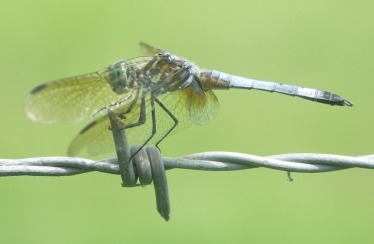 dragonfly-220802_960_720