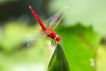dragonfly-515512_960_720