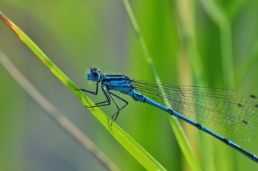 dragonfly-540839_960_720