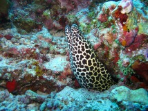 photo courtesy of simonesaponetto @ https://pixabay.com/en/moray-eel-maldives-sea-363626/