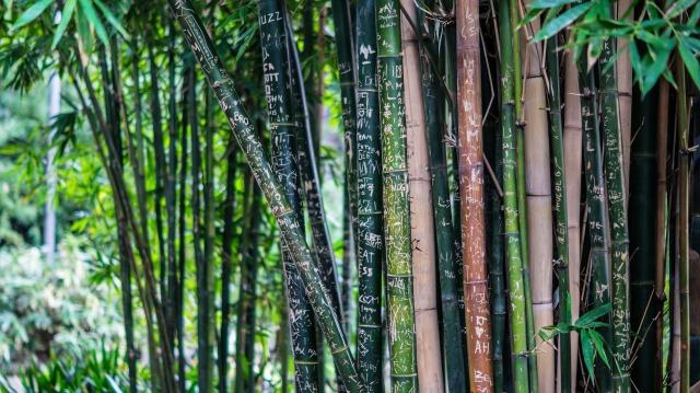 bamboo-142635_1920