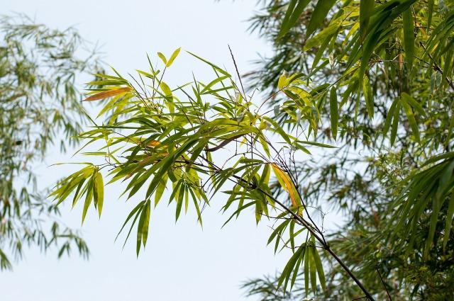 bamboo-291205_1280
