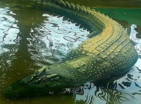 Lolong_crocodile